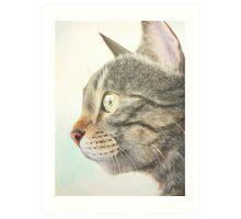 Tabby portrait Art Print
