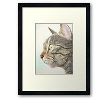 Tabby portrait Framed Print
