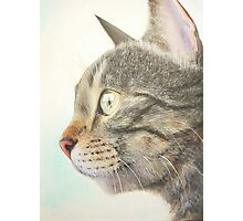 Tabby portrait Photographic Print