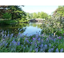 Spring on the moat Photographic Print