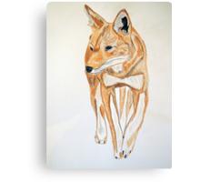 Ethiopian Wolf Canvas Print