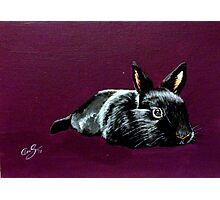 Black Rabbit Photographic Print