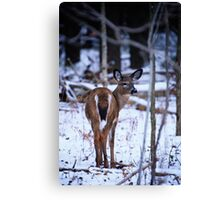 First Snow of the Winter Canvas Print
