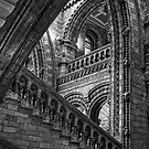 Natural History Museum by FranJ