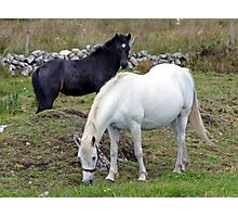 Connemara Pony Mare and Foal Photographic Print