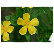 The Little Yellow Flower Poster