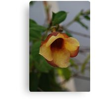 Multi-Coloured Tropical Flower Canvas Print