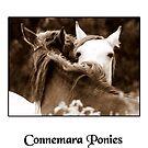 Connemara Ponies by ConnemaraPony