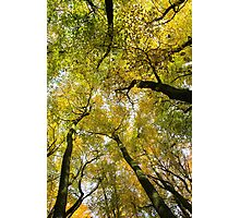 Autumn Gold Photographic Print