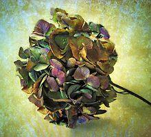 Hydrangea Still Life by Jessica Jenney