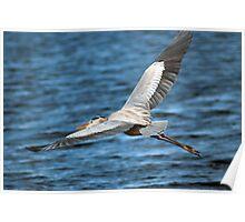 Blue Heron Flight Poster