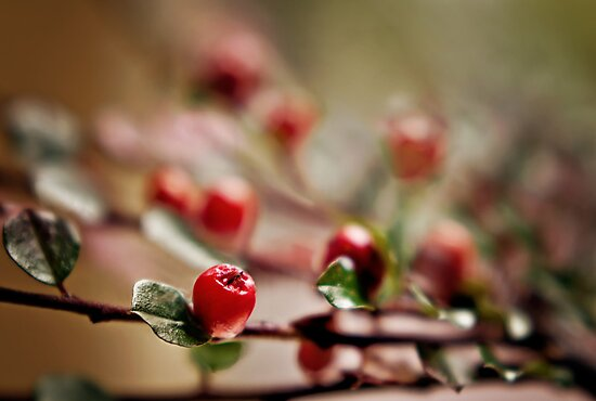 autumn berries.. by Michelle McMahon