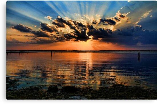 Rays Galore by Carolyn  Fletcher
