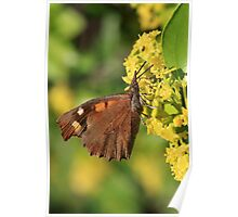 Nettle-Tree Butterfly on Yellow Flowers (Golemo Boliowo) South-West Bulgaria 2012 Poster