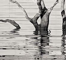 Tree Reflections by Adrian Park