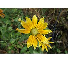 A winter yellow flower in a botanical garden. Photographic Print