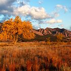 Cottonwood Glow by Ken Fleming