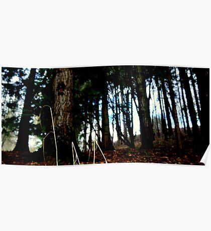 forest spirits ... Poster