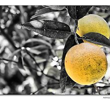 The Orange (Laringa) by NevilleMangion
