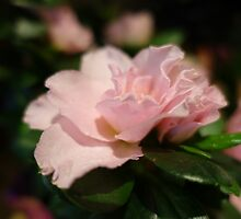 A pretty pink flower.  floral photography. by naturematters