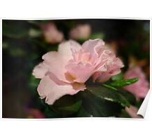 A pretty pink flower.  floral photography. Poster
