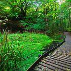 Cwmcarn forest walk, South Wales by Ciaran Sidwell