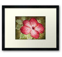 Pretty Hibiscus  Framed Print