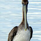 Pelican (iPhone Case) by AuntDot