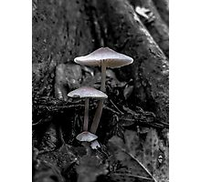 Mushrooms in the Woods Photographic Print