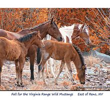 Fall for the Virginia Range wild horses, East of Reno, NV by Ellen  Holcomb