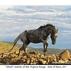 """Ghost"" Wild Stallion on the Ridge, East of Reno, NV by Ellen  Holcomb"