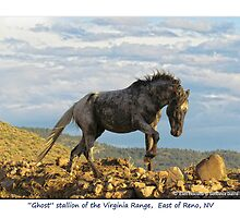 """Ghost"" Wild Stallion on the Ridge, East of Reno, NV by Ellen  Holcomb"