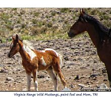 Paint Foal and Mom, Virginia Range Wild Mustangs, TRI, NV by Ellen  Holcomb