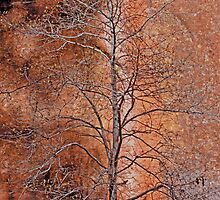 Red Rock Autumn by photojeanic