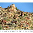 """Comstock Gold"" wild mustangs of the Virginia Range, NV by Ellen  Holcomb"