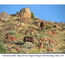 """Comstock Gold"" wild mustangs of the Virginia Range, NV by Ellen  Holcomb"