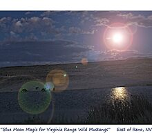 """Blue Moon Magic"" for Virginia Range mustangs, TRI NV by Ellen  Holcomb"