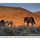 &quot;Into the Nevada Sunset&quot; small band of Virginia Range, Nevada by Ellen  Holcomb