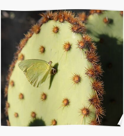 Moth on a Cactus Poster