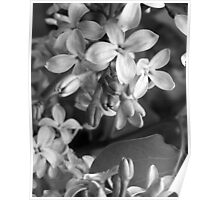 The Grayscale Lilac Poster