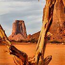 Gnarled tree at North Window by Robyn Lakeman