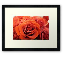 Beautiful red rose flower photography. Framed Print