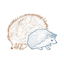 Hedgehogs & Echidnas Are Natural Enemies by Pierce Murphy