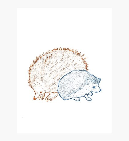 Hedgehogs & Echidnas Are Natural Enemies Photographic Print