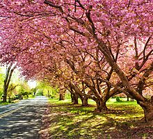 Pink Trees by Justin DeRosa