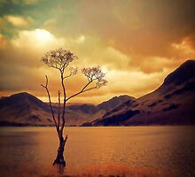 Famous Tree of Lake Buttermere by Nicola Smith