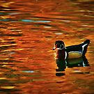 Floating on Autumn's Reflections by Barbara  Brown