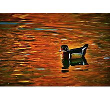 Floating on Autumn's Reflections Photographic Print