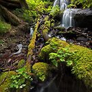 Fairy Falls VI by Tula Top
