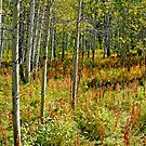 Aspens by Harry Oldmeadow